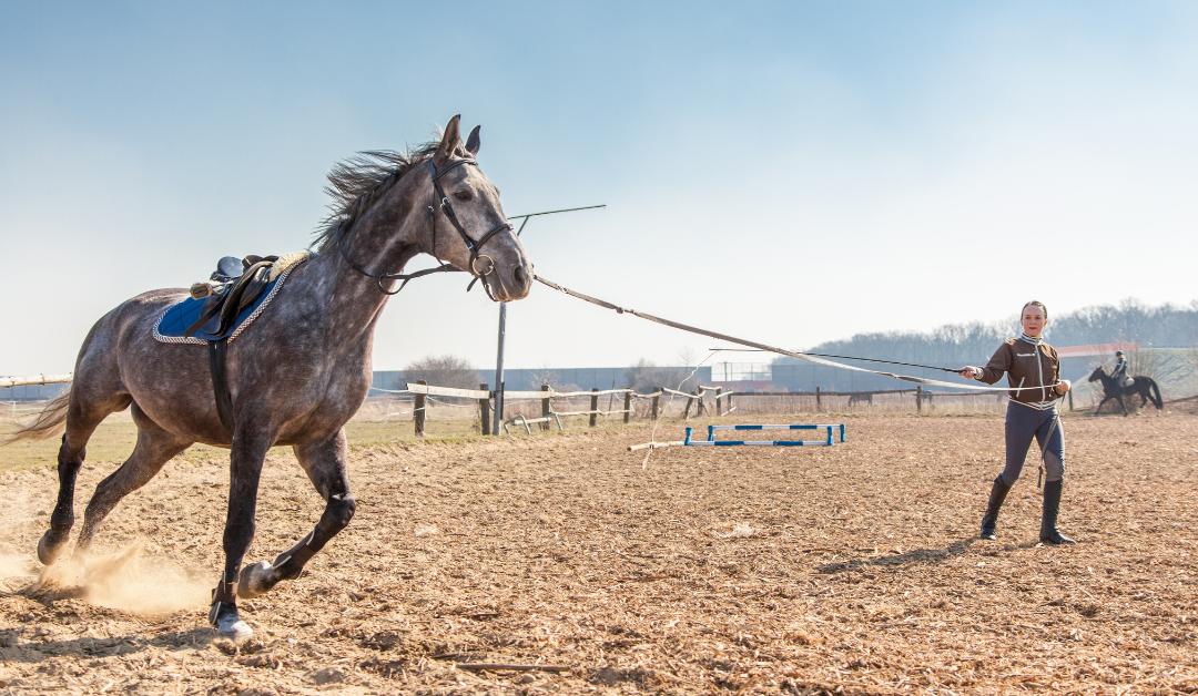 ¿Cómo entrenamos a nuestros caballos?
